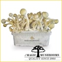Albino Mycelium Grow Kit Mycelium Freshmushrooms