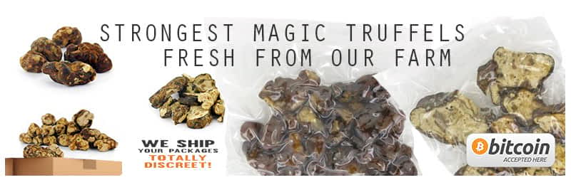 Magic Truffles from amsterdam holland by mushrooms