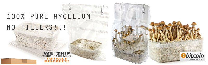 Buy magic mushroom grow kits from amsterdam holland