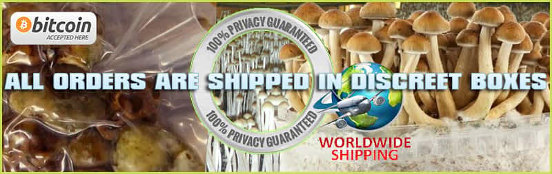 Magic truffles and mushroom grow kit world wide delivery