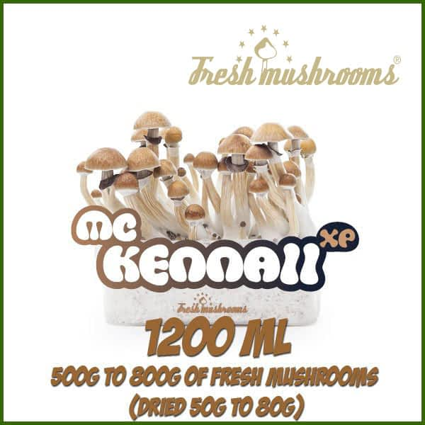 McKennaii Grow Kit Freshmushrooms