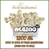 Albino A 1200ml freshmushrooms growkit