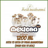 Mexican 1200ml Grow Kit Freshmushrooms